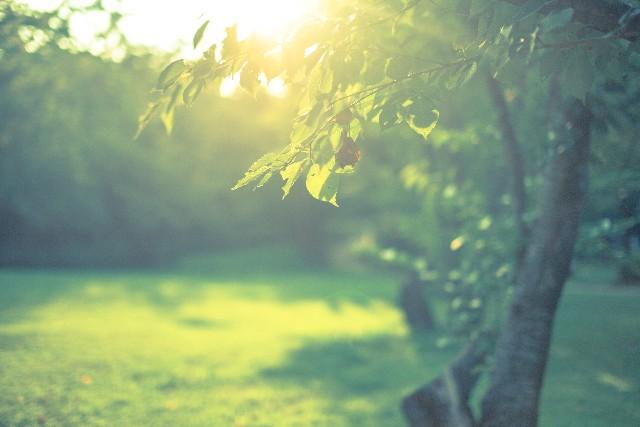 植物(木)の英語一覧