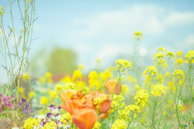 花の英語フレーズ
