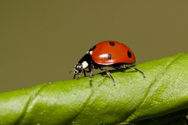昆虫の英語一覧