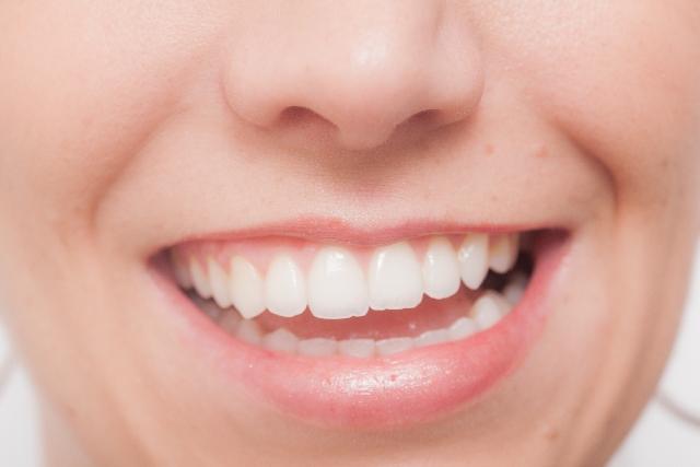 歯の種類の英語一覧